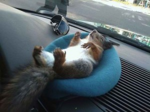 belarusian_soldier_becomes_best_friend_for_rescued_squirrel_640_13