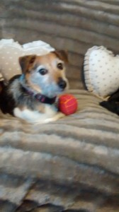 Minnie (@PlantJacqueline). She loves football & always keeps her ball close!
