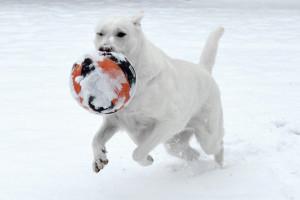 dog snow fetch