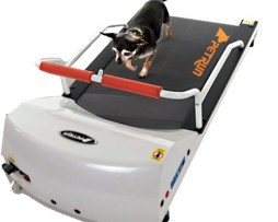 pr700-dog-treadmill-lifestyle