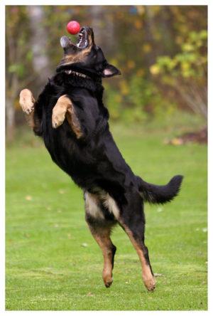 dog-1361473-639x944