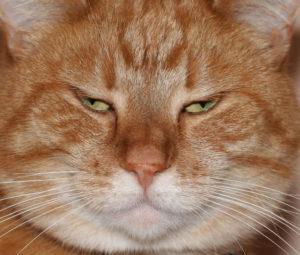 fat-cat-1163100-639x542