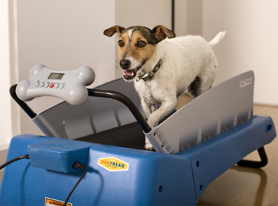 Dogtread Small Dog Treadmill Pawsshion Com Pet Supplies