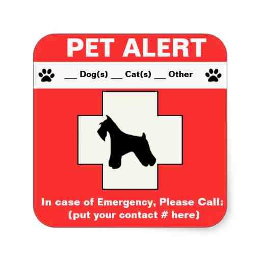 Emergency sticker (Photo source: www.zazzle.com)